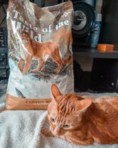 gato con comida para gatos taste of the time canyon river